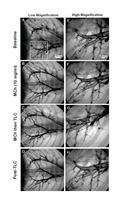 Dynamic in-vivo imaging
