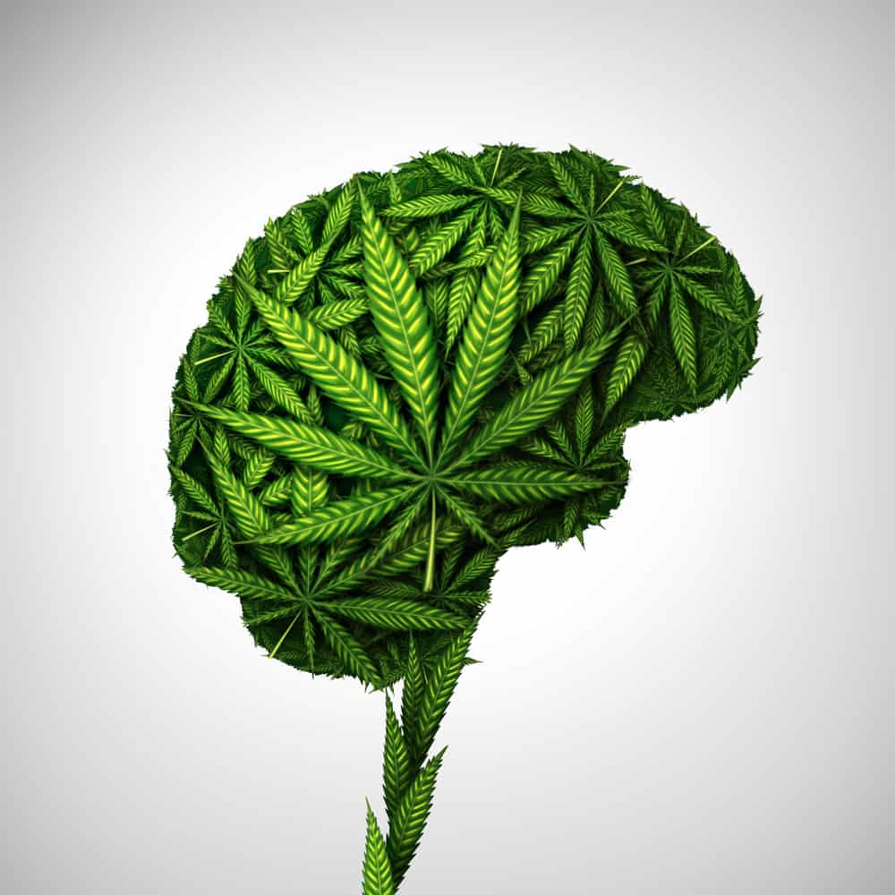 cannabis exposure